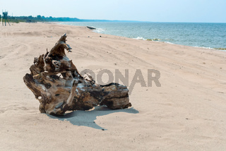 a piece of old wood on the seashore, a wooden snag on a sandy beach