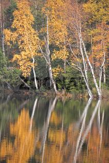 See im Slavkovský les
