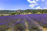 panorama with lavender and small town