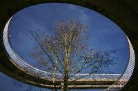 The tree in the bridge
