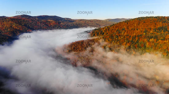 Foggy morning, mountains and forest. Magical and colorful autumn in Carpathians, Ukraine.
