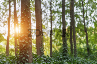 woods and sunshine in park