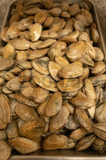 shellfish clams on display for sale after harvest