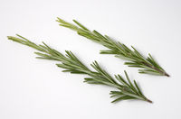 Fresh raw branches of rosemary on white background. Top view.
