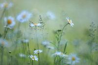 A flowery meadow