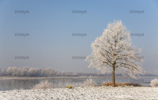 Winter on the Rhine