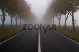 The road in autumn and thick fog