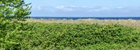 Baltic sea with hedge roses