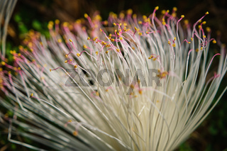 Macro of pink flowers carpel nature soft focus closeup blur background