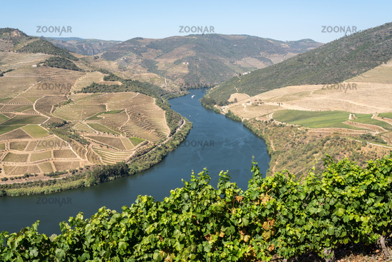 Rows of grape vines line the valley of the River Douro in Portugal