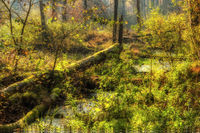 Kaltenhofer Moor in Schleswig-Holstein in Germany