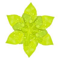 Artificial Star Shape Green Flower Isolated Artwork