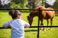 Young girl watching horses on farm, summer day