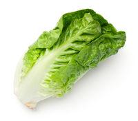 Romaine Lettuce Isolated On White Background