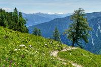 Mountain trail to Dalfazalm with tree, Achensee, Rofan, Tyrol, Austria.