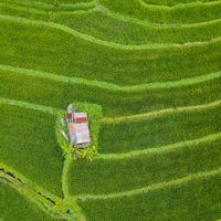 Small hut in the middle of paddy fields aerial view