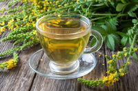 A cup of agrimony tea with fresh agrimony plant