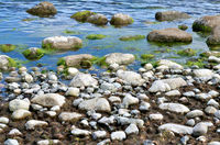 Stones, algae and water