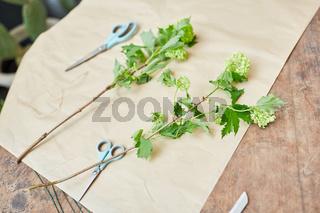 Blumenscheren und Blumen auf Papier