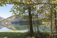 Autumnal mood picture, lake shore with deciduous trees