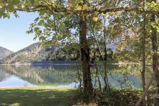 Herbstliches Stimmungsbild, Seeufer mit Laubbäumen