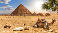 The Pyramid of Menkaure and a camel, beautiful desert scenery, Egypt