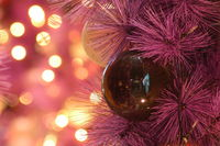 Shiny Christmas red ball hanging on pine branches with festive background