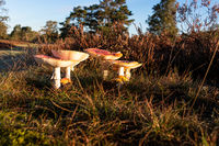 Small and big toadstools
