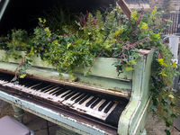 Flowers growing out of a baby grand piano