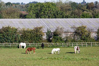 A Few Horses Glazing on a Field