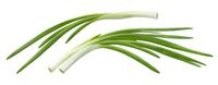 Fresh chives, green onion isolated on white background