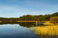 pine forest and peaceful lake