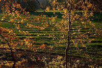 Autumn leaves at the edge of the forest, hiking trail, Hoehengluecksteig, Frankenalb, Bavaria