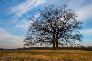 einzelner Baum Lichstimmung