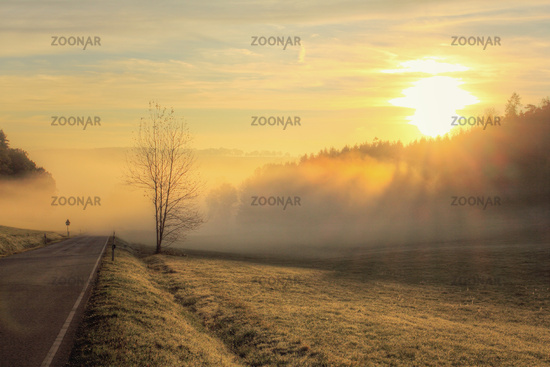 A morning in the Odenwald