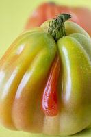 Coeur-de-boeuf tomato