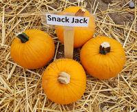 Snack Jack; Hokkaino, Kuerbis; Speisekuerbis
