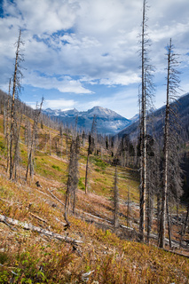 Trees after a forest fire in Kootenay National Park, British Columbia