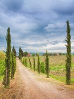 Cypress alley in Tuscany
