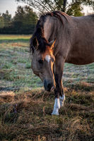 watchful horse