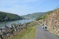 Hiking trail near Assmannshausen