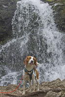 Beagle at the Josefstaler waterfall