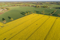 Drones flight and aerial view over a rape field