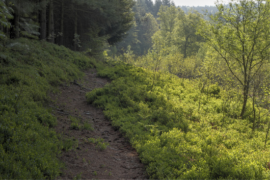 Nature reserve in the Odenwald