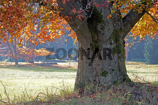 Baum im Moorgebiet im Slavkovský les