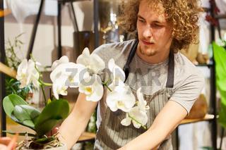 Junger Florist in der Ausbildung mit einer Orchidee