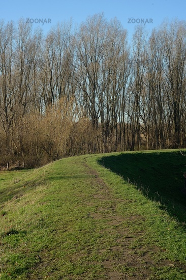 Path on the dike, wooded