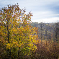 Autumn colours in the forest of Leithagebirge in Burgenland