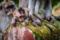 A newborn baby monkey learns to crawl