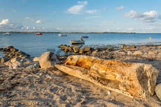 Scenic beach with old tree trunk and boats in the background at the Baltic Sea at sunset